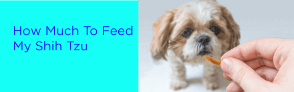 How Much To Feed My Shih Tzu