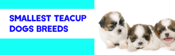Smallest Teacup Dogs Breeds