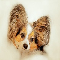 smart small dog breeds