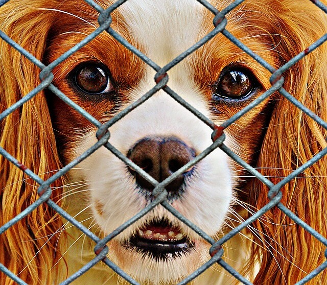 Dog Fence photo