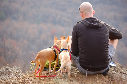 Best Dog Carrier Hiking Backpacks