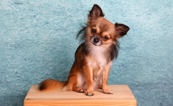 How to control anxiety and keep a dog calm during grooming: